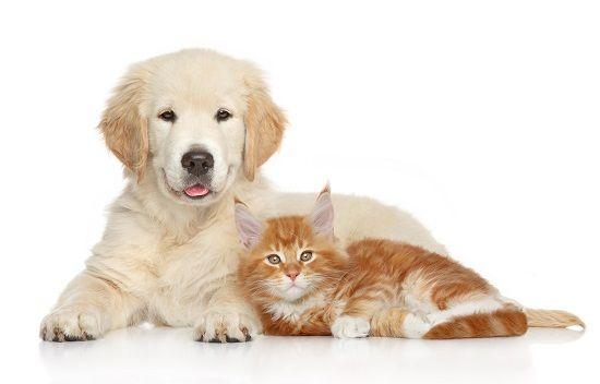Companion<br /> (Dog & Cat)